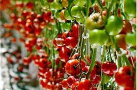 A big thank you to the Thrace Greenhouses